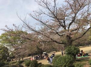 桜と写真加工